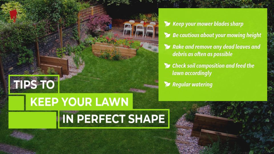 5Ideas-to-Shape-your-lawn-Perfect