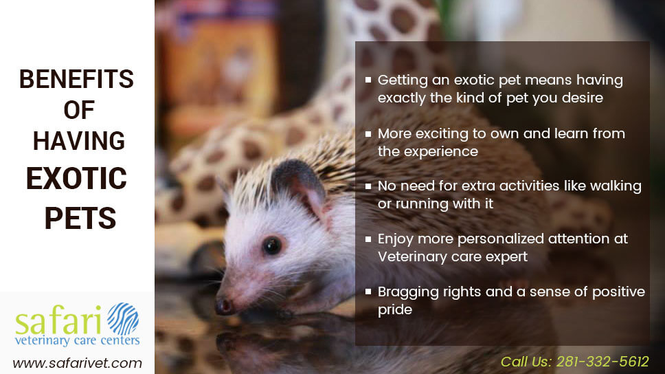 Benefits of having exotic animals as your pet