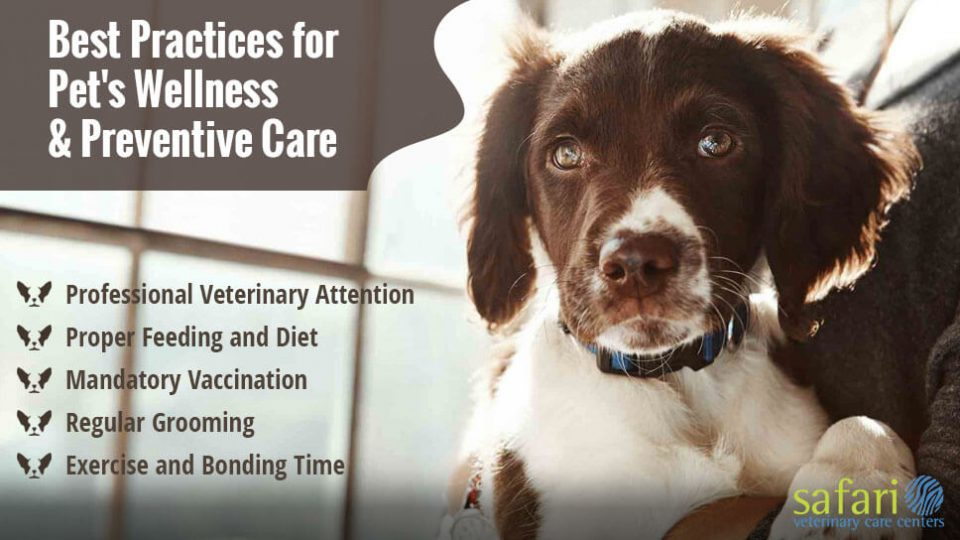 Here are five best practices to keep in mind for pet's wellness and preventive care