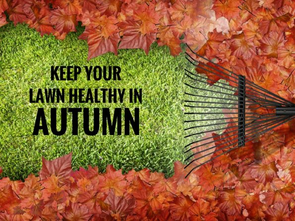 keep your lawn healthy in autumn