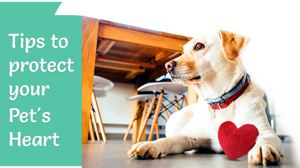 Tips for pet's heart protection