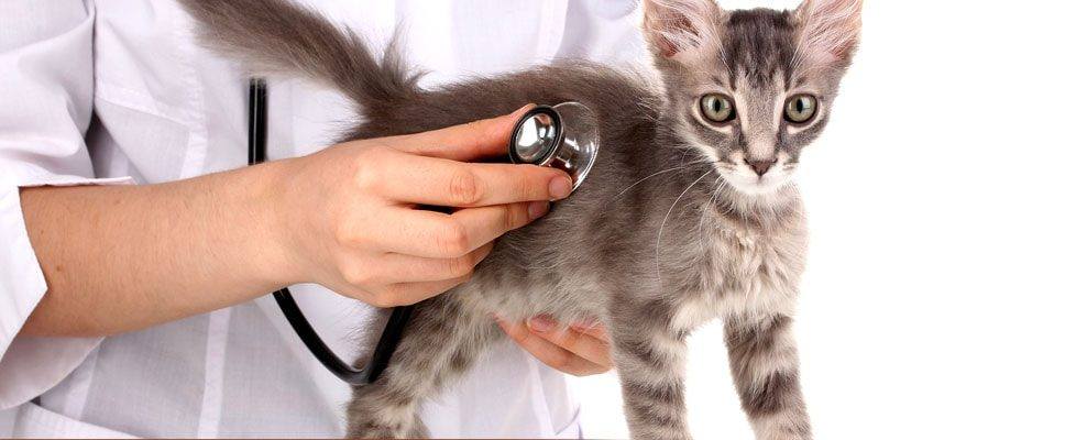 Vet-Visit-for-your-PetsHealthCheckup